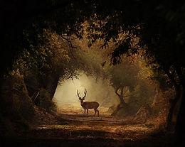15 best artistic wildlife photos by indian wildlife photographer Aarzoo Khurana
