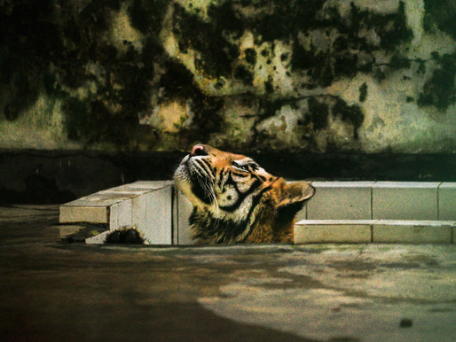 ZOO- A Death Cell, striking images by Enamul Kabir of abusing and harassing animals