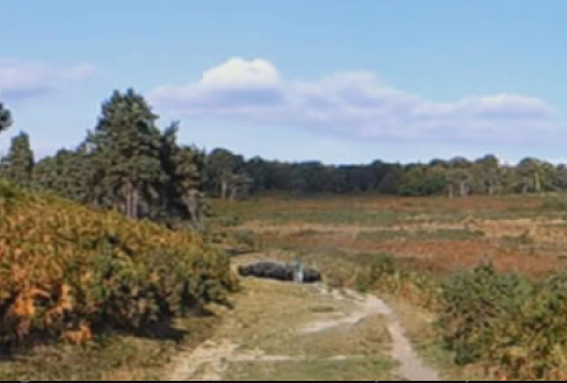 The Future of Ashdown Forest