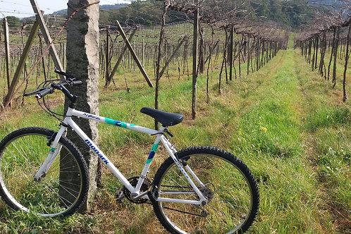 Slow Bike Passeio Cultural