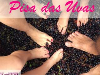 Inicia a Pisa das Uvas no Vale dos Vinhedos