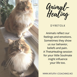 Animal-Healing.png