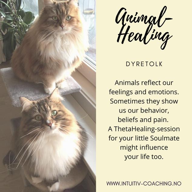 Animal-Healing