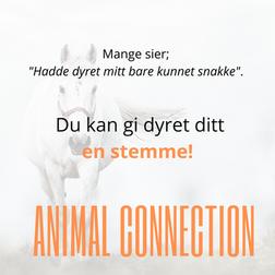 Animal Healing annonse 3.png