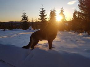 Sterk kjærlighet og takknemlighet fra hund til eier!