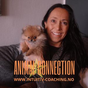 Animal Healing annonse 4.png