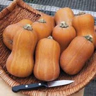 Honeynut Squash, Locally Grown - per pound