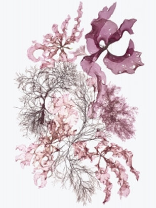 Card - Seaweed #5