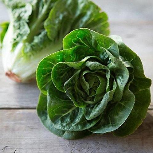 Artisanal Green Sweet Gem Lettuce - each