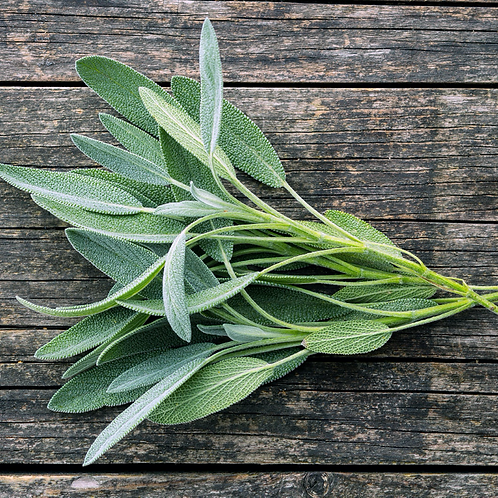 North Tisbury Farm Sage - Harvest to Order