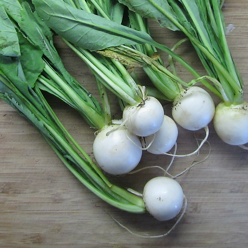 Baby Bunched White Turnip