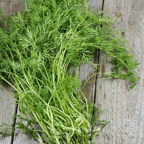 North Tisbury Farm Dill - Harvest to Order