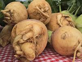 Morning Glory Farm Rutabaga - price by the each