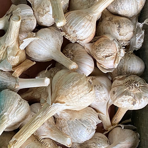 Garlic - by the pound