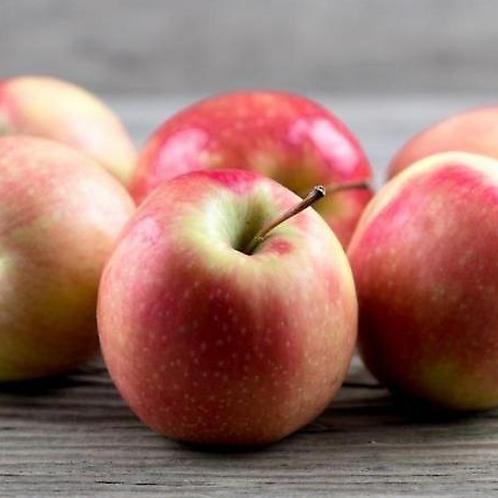 Pink Lady Apple, Organic - 1 lb