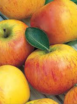 Orange Pippin Apple - 1 lb