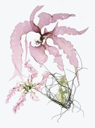 Card - Seaweed #6