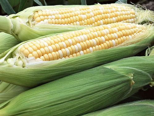 Fresh Bi-Color Corn, per ear