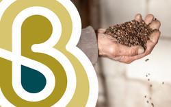 Sarrasin Bio Bourgogne