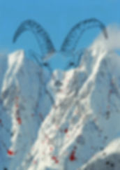Alpensteinbock.jpg