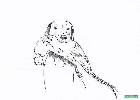 Hund3_AnneBlaich_Zeichnung.jpg