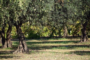 olives-1752199_1280.jpg