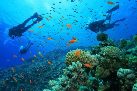 diving-in-phuket.jpg