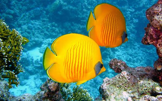 zitronenfalter-fish-380037_1280.jpg