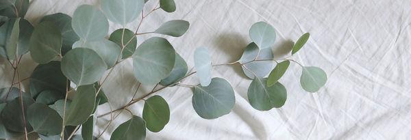 eucalyptus_leaves.jpg