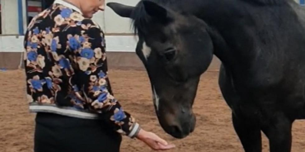 Ontmoet jezelf door de ogen van het paard (VOL)