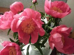 bloeien