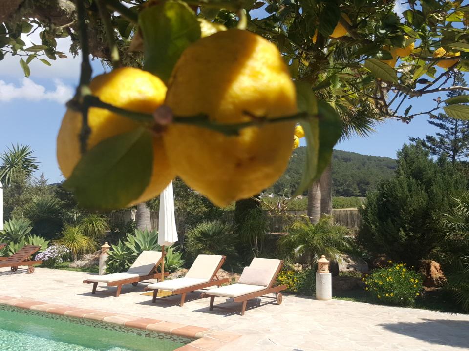 citroenen bij het zwembad