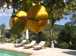 citroenen bij het zwembad workation ibiza 2021