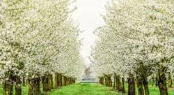 www.fruitboerderij.com