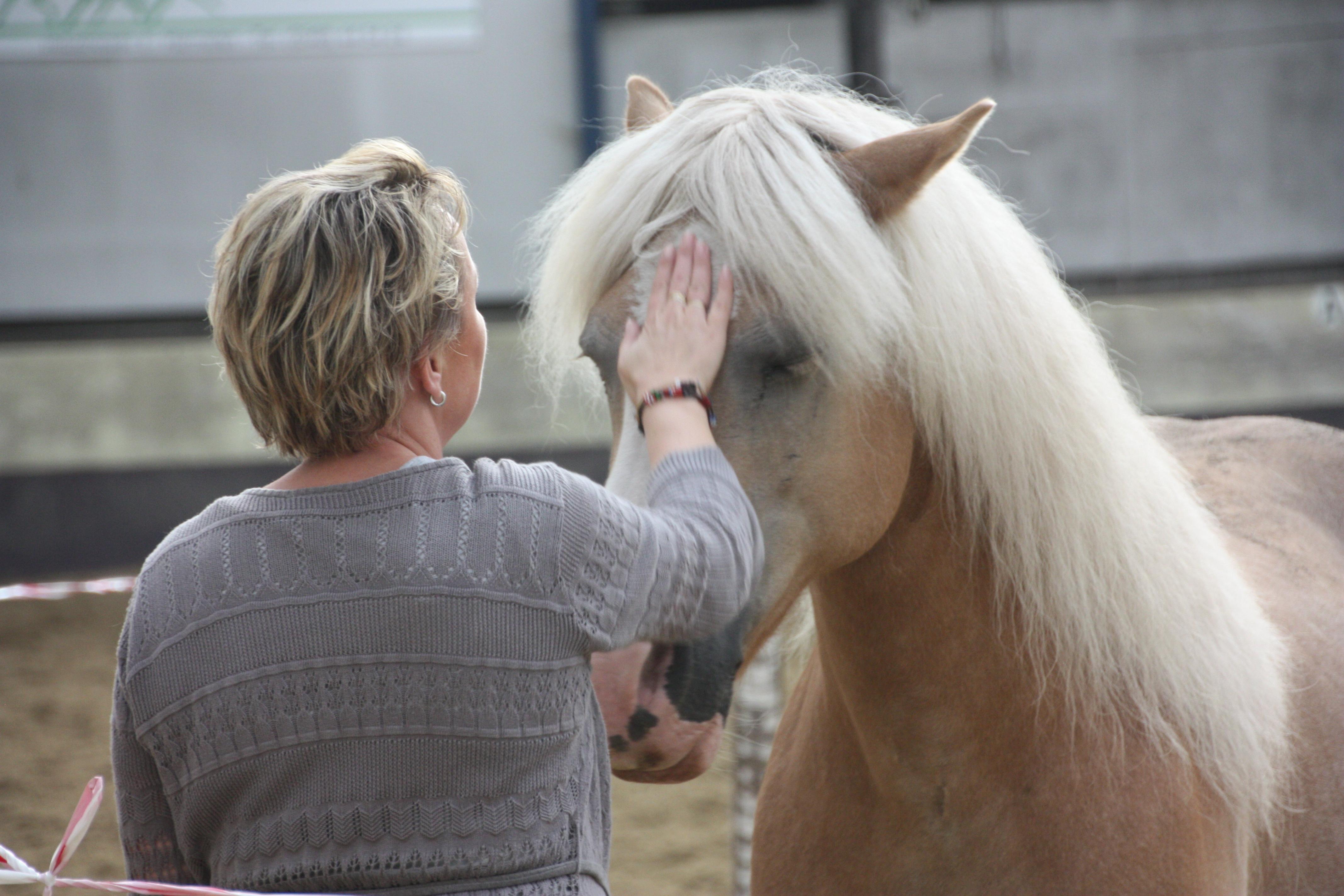 het paard, de co-coach