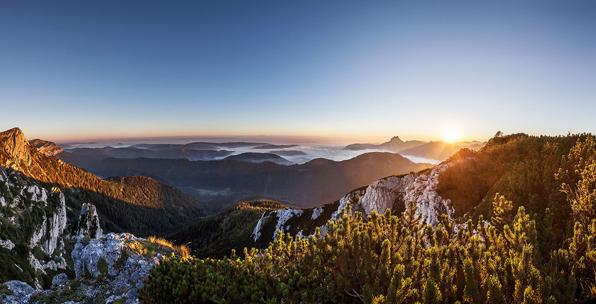 edelweiss-6430 Panorama Kopie