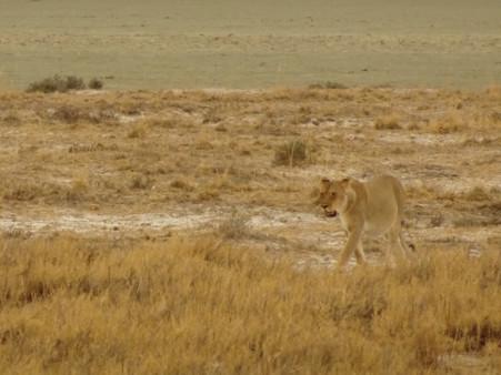 Etohsa National Park