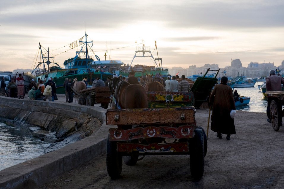 Fishermen gather at dawn on the port of Alexandria, 2009