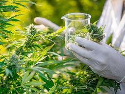Quantung  Portugal Cannabis Export-legalised-1024x768.jpg