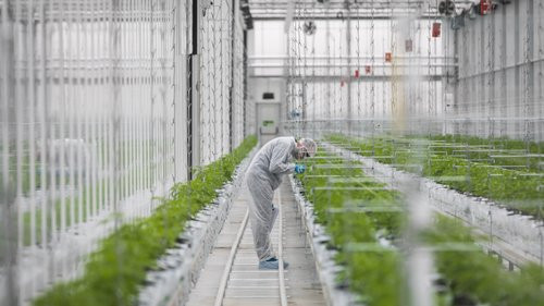 Exportacao Cannabis Medicinal I Quantung Portugal