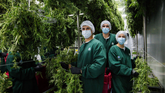 Quantung Portugal I Exportação de Cannabis Medicinal Portugal