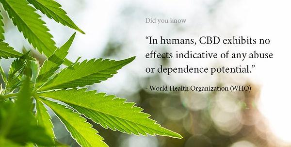 Cannabis medicinal Portugal I cannabis Portugal I Projetos Cannabis