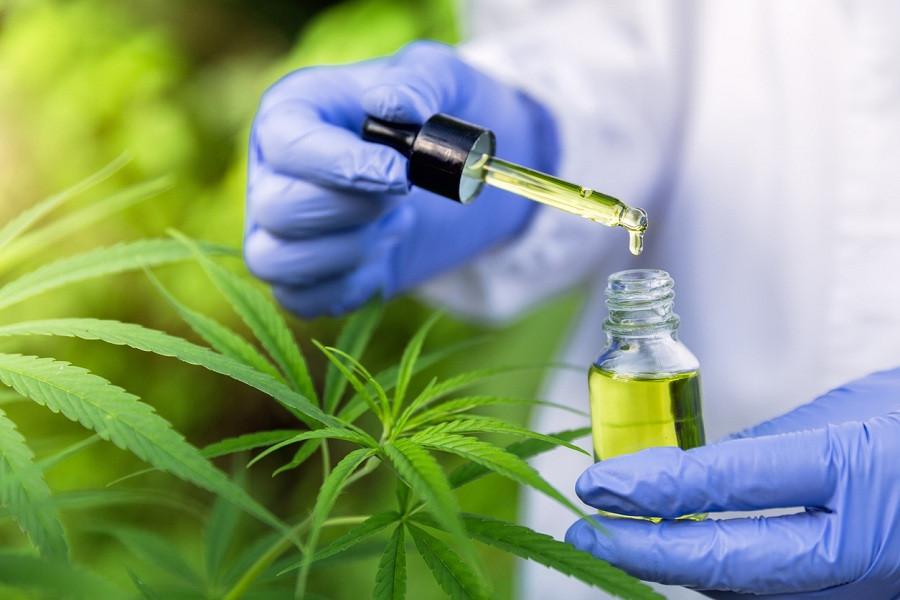 Cognitive Effects I Quantung  Portugal Cannabis Export