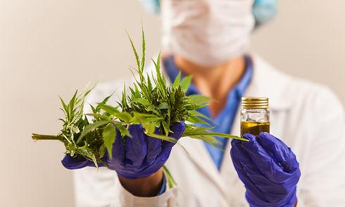 Quantung  Portugal Cannabis Export