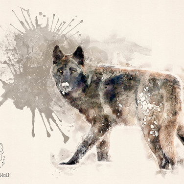 Wolf x by Cristalwolf - folio web.jpg