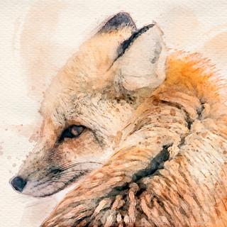 Watercolor fox.jpg