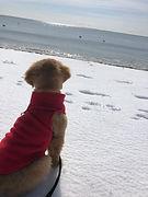 puppy on the beach.jpeg