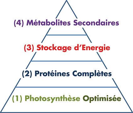 La pyramide du végétal.jpg