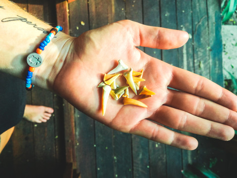 Sodwana - Shark teeth.jpg