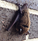 Bats and Rabies - How to Avoid Exposure